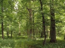 Miško pardavimas geriausia kaina